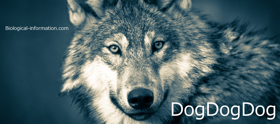 DogDogDog